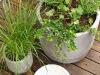 Altanprojekt - Silverpäron, lavendel, gräs -08